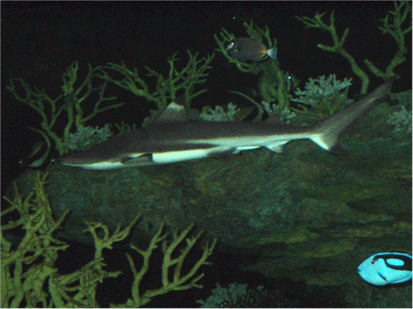 EASI Environmental Aquatic Service International - Fish Prices