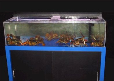 EASI Environmental Aquatic Service International - Lobster Tanks