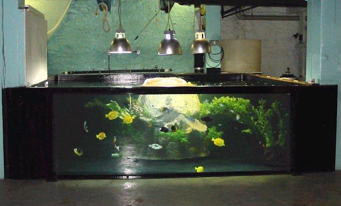 5000 gallon aquarium bing images for 10000 gallon fish tank